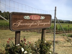 2014 Reserve Chardonnay - Ferrington Vineyard