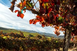 MV Pinot Noir - Santa Lucia Highlands