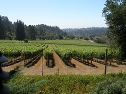 2013 Pinot Noir - Lester Family Vineyard at Deer Park Ranch Image